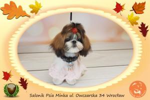 Salonik Psia Minka psi fryzjer Wrocław strzyżenie psów