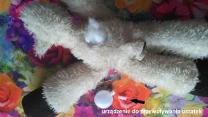 Wrocław strzyżenie psów Salonik Psia Minka psi fryzjer - urządzenie do przywoływania Uszatek