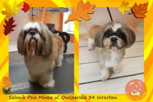 Wrocław groomer Salonik Psia Minka strzyżenie psów
