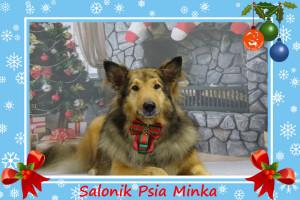 groomer Wrocław strzyżenie psów Salonik Psia Minka