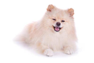 Ile Kosztuje Strzyżenie Psa Salonik Psia Minka
