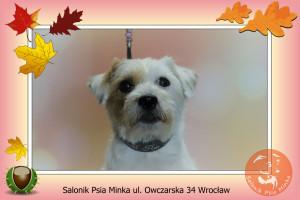 spa dla psa Salonik Psia Minka