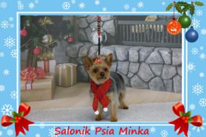 spa dla psa Wrocław Salonik Psia Minka